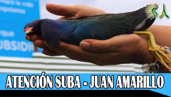 Tinguas, comadrejas , curíes y serpientes sabaneras aparecen muertos cerca al humedal Juan Amarillo