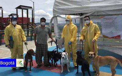 50 animales fueron atendidos en feria de servicios del Distrito