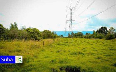 Recursos para la reserva Thomas van der Hammen en Suba fueron aprobados por el Concejo
