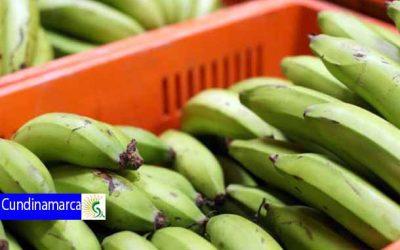 Apoyo para transportes de productos perecederos agrícolas y pecuarios para la comercialización en Cundinamarca