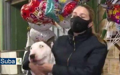 Perro salvó a 15 personas de tres atracadores en Suba