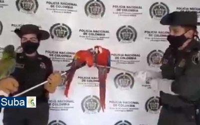 Aves fueron rescatadas en Suba, por la Policía Nacional de Colombia