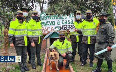 Uniformados le dan la bienvenida a su compañera de turnos, una perrita que vive en el CAI de la Gaitana
