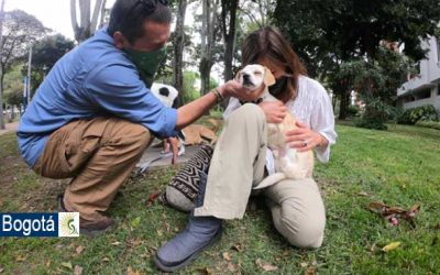 Este año el Distrito ha entregado 436 perros en adopción