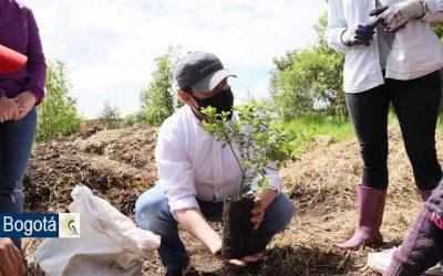 Secretaría de Ambiente plantó más de 400 árboles en el humedal Capellanía en Fontibón